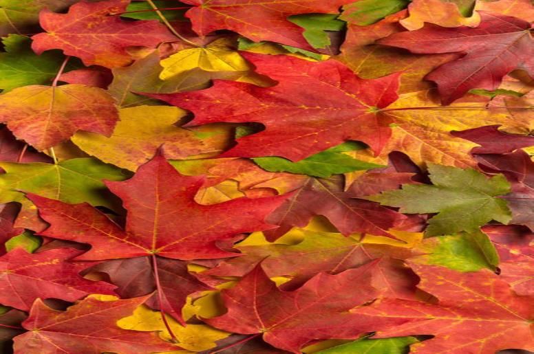 2019 Leaf Drop Off!